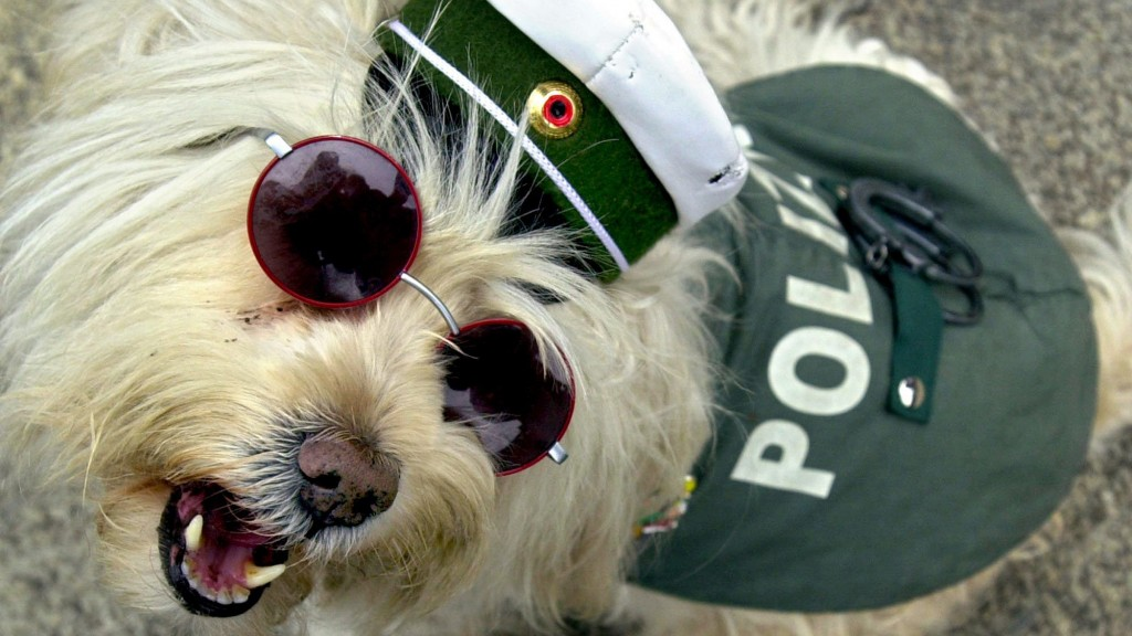 Hund in Polizeiuniform (Bild: dpa)